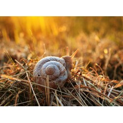 Snail Gel, nature's beauty secret?